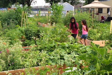 Everett Community Growers